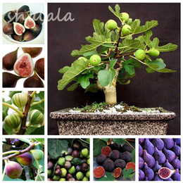Fácil cultivo de vegetales online-50 piezas Four Seasons Potted Sweet Honey Semillas Balcón Verduras Frutas Bonsai Plant DIY Home Garden, fácil de cultivar, color mezclado