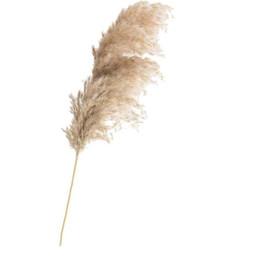 blütenstiel draht weiß Rabatt 20 PC-Hochzeit Pampas-Gras-Blumen-Bündel natürliche getrocknete Blume Reed Pampas-Gras Raw Color Home-Dekor-freies Verschiffen