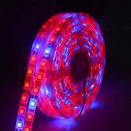 5 M LED Fito Lambaları Tam Spektrumlu Şerit LED Işık 300 LED'ler 5050 Çip LED Fitolampy Sera Topraksız bitki Için Işıkları Büyütün cheap dc grow lights nereden dc ışıkları büyür tedarikçiler