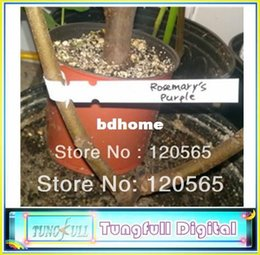 2019 plastik pflanze tags großhandel Wholesale-120 Wrap-around-Baum-Tags 8