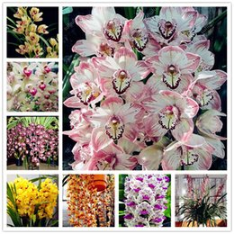 100pcs importés Bleu ORHID du Phalaenopsis Graines Outdoor Bonsai Pot De Fleur Balcon