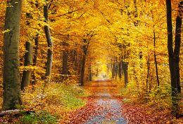 fallen foto kulisse Rabatt Fotografie Backdrops Herbstwald Laub Hintergrund Fotografie Studio Foto Hintergrund fotografia 5x7ft Kulissen