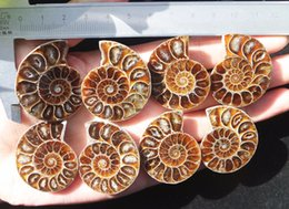 Concha de amonita online-Parejas Half Cut Ammonite Shell Jurrassic Fossil Specimen Madagascar al por mayor Ammonite Shell Fossil Espécimen Fengshui