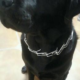 2019 metallketten für hund Guter Verkauf Hundehalsband starke professionelle Metall Nylon Prise Hundetraining Kette Kragen Prong Pet Choke Kragen 3 verschiedene Größe rabatt metallketten für hund