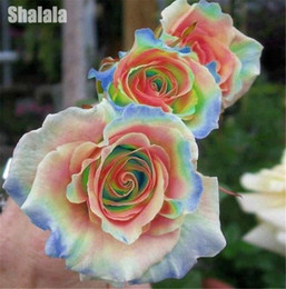Fleurs de jardin arc en ciel en Ligne-100pcs / Sac Rare Couleurs Mixtes Rose Graines Arc En Ciel Rose Bonsaï Fleur Balcon Plante DIY Maison Jardin Plante Colorée Particules