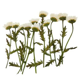 Hacer tarjetas de invitación online-Paquete de 12 Tallos Flor Real Prensada Para Invitaciones de Boda Creación de Tarjetas Floral DIY Álbumes de Recortes Tarjetas de Felicitación Velas Decoración