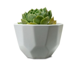 100pcs semplice polpa bianca carnosa piccola poligonale cucitura bocca larga opaca vaso di fiori da