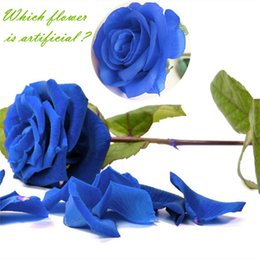 Gefälschte blaue rosen online-Günstige Getrocknete 1pc Silk Roses Künstliche Blumen Hochzeitsdekoration Gefälschte Blumen Weiß Blau Grün Rosa Rot Lila Künstliche Seide