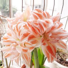 Vente chaude 50 pcs True rose Lily bonsaï Fleur Lilium plantes Faint Scen Bonsai Pot Plantation Pour La Maison jardin décoration ? partir de fabricateur