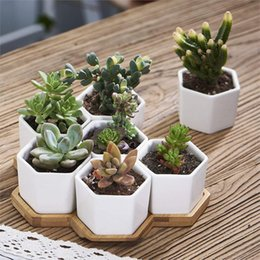 Small Indoor Plants Coupons, Promo Codes & Deals 2019 | Get