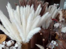 Erba di pampa secca naturale, Phragmites Communis, pianta di canna, mazzo di fiori da sposa, altezza 24 '' per la decorazione domestica da
