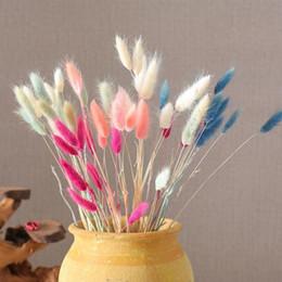 Conejo de cola natural de flores secas de blanco verdadero colorido de las flores Manojo la decoración del hogar decoración de la boda libre del envío E5 desde fabricantes