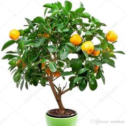 semi di alberi crescenti Sconti 50 pezzi di frutta commestibile semi di albero di bonsai di mandarino, semi di agrumi bonsai di mandarino semi di arancio facili da coltivare