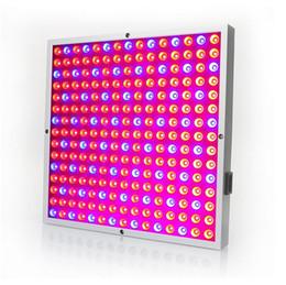 Argentina venta al por mayor 45W Spectrum Grow Light Kit RedBlue LED para plantas de interior que crecen y florecen cheap wholesale leds grow lights Suministro