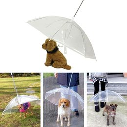 Un parapluie transparent pour animaux de compagnie, un petit chien, un équipement de pluie avec un chien, garde votre animal au sec, à l'aise ? partir de fabricateur