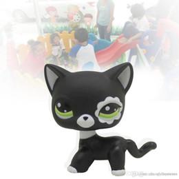 2017 New Pet brinquedos loja rara preto gato pouco olhos azuis modelos animais patrulla canina Figuras de Ação crianças brinquedos de presente de
