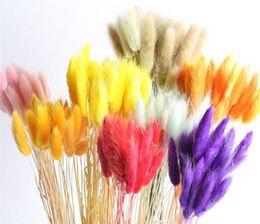 Tallos de decoracion online-20 tallos flores secas naturales colorido Lagurus Ovatus verdadero ramo de flores para el hogar decoración de la boda cola de conejo manojo de hierba