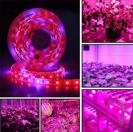 DC 12 V LED Büyümek ışık Tam Spektrum 5 M LED Şerit işık 5050 Sera Topraksız Bitki Büyüyen Için Phyto Bitki Büyüme lambaları nereden