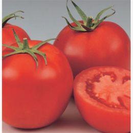 2019 varietà di rosa rossa Suntoday Lycopersicon Big Red F1 Chinese Newton Pomodoro Vegetable Seeds Giardino asiatico Pianta Ibrido Non-OGM Semi freschi biologici