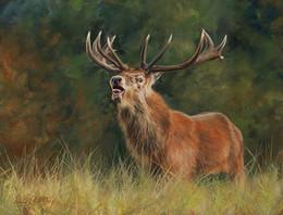 Ilustraciones de ciervos online-Artwork -2-red-deer-ster- Arte moderno de lienzo sin marco para decoración de hogar y oficina, pintura al óleo, pinturas de animales, marcos.