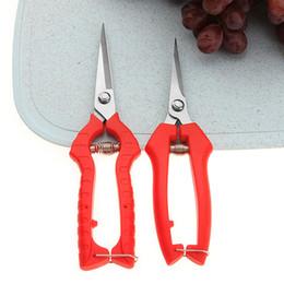 escolhendo uvas Desconto Tesoura de poda de horticultura prático preferencial tesoura de frutas de corte de frutas tesouras de frutas