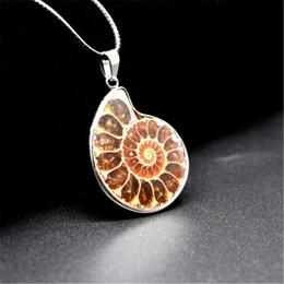 2019 pietra ammonita Vintage Natural Stone Ammonite Fossils Seashell Ciondolo Collana animale Gioielli in costume per uomo Donna 1 Pz