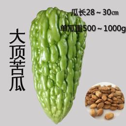 Suntoday Green Bitter Melon / Gourd Chinese Giant - Una varietà extra forte ad alto rendimento da