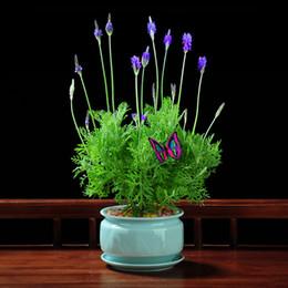 2019 piante da giardino fragranti Semi di lavanda bonsai francese lavanda bonsai molto fragrante crescita naturale bonsai casa giardino pianta in vaso 100 pz / borsa in vendita piante da giardino fragranti economici