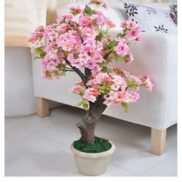 Semi di alberi crescenti online-30 PC I semi di ciliegio giapponesi sbocciano continuamente. I semi dell'albero sono facili da coltivare e vivere. Innaffiatura di fiori all'aperto del giardino di quattro stagioni