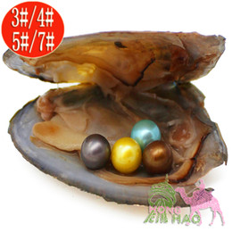 pearl oyster shell wholesale Australia - Free Shipping Jewelry Gifts Shell Pearls Oysters Vacuum Packed 6-7mm Round AAAA100% Natural Pearl Oyster Monster