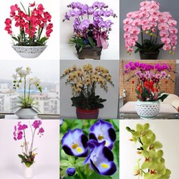 Seed packS online shopping - Hot Sale Mixed colors pack Unique Butterfly Orchid Seed Garden Bonsai Flower Seeds