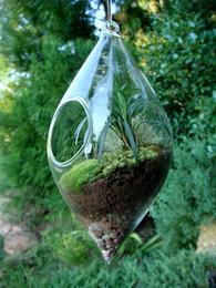 Olive Shape Garden Succulent Planter,air Plant Bonsai ,glass Terrarium Pots  For Home Decoration,garden Planters,great Gifts