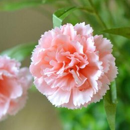 Discount touch happy - Real touch artificial carnations silk flower carnation mother's gift home decorations Happy mother's day livin