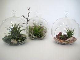 Shop Glass Terrarium Kit Uk Glass Terrarium Kit Free Delivery To