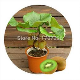 Ingrosso Semi di kiwi, piante in vaso, albero MIN La nutrizione è ricca, bella, bonsai, semi di melone vegetale - 10 pezzi / lotto
