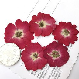 $enCountryForm.capitalKeyWord Canada - Latest Chinese Rose Photo Frame DIY Pressed Flowers, Raw Material True Plant Specimens For Wall Decoration 80 Pcs Free Shipment Wholesales