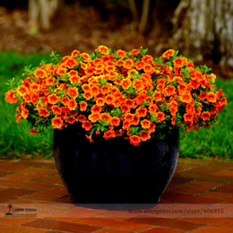 4a9a56167b91df Best sellers for Annuals Seeds