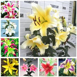 flowers for outdoor pots Australia - Aqutic Plant Lily Seeds, Double Lily Flower Seed, 100Pcs Bag Outdoor Bonsai Pot Bulbous Flowers Root Lilium Plants for Home Garden