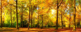 forest oil paintings NZ - autumn forest wallpapers golden woods oil painting background wall 3d murals wallpaper for living room