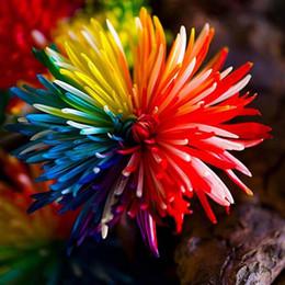 100 pz arcobaleno crisantemo semi di fiori di colore raro balcone giardino domestico fai da te pianta facile da coltivare in magazzino