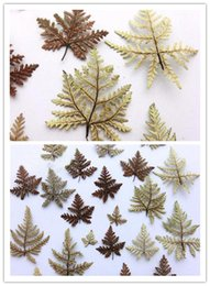 $enCountryForm.capitalKeyWord Australia - 100 pcs Dried 1.5-4cm Fern Leaf Leaves Plants Herbarium For Jewelry Postcard Photo Frame Bookmark DIY Project Making Accessories