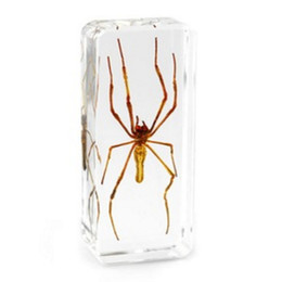 resin mice UK - Giant Wood Spider Specimen Learning&Education Toys Resin Embedded Spider Transparent Mouse Paperweight Kids New Type Science&Discovery Kits