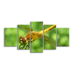 Art Canvas Prints Australia - 5 pieces high-definition print dragonfly canvas painting poster and wall art living room picture QIT5-003