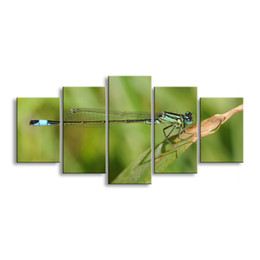 $enCountryForm.capitalKeyWord UK - 5 pieces high-definition print dragonfly canvas painting poster and wall art living room picture QIT5-012