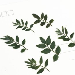 $enCountryForm.capitalKeyWord Canada - 2019 New Green pepper leaf Dried Pressed Small Gifts Raw Material Specimens Handmade For Epoxy phone case 120 Pcs Free Shipment