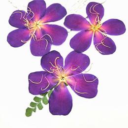 $enCountryForm.capitalKeyWord Canada - 2019 Newest Wild Peony Press Nature Plant Original Color For Cristmas decoration DIY Raw Material 6-8CM 60Pcs Per Lot Free Shipment