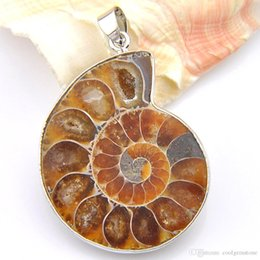 Natural Ammonite Fossil Pendant Australia - 5 Pcs Lot Unique Unisex Accessories Awesome Natural Stone Ammonite fossils 925 Silver Plated floating charm locket Pendant Necklaces