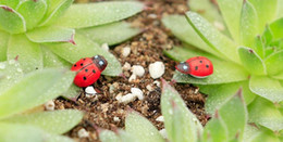 $enCountryForm.capitalKeyWord Australia - artificial 10 PCS Lady beetle Ornament garden miniatures gnomes moss terrariums crafts figurines for home garden decor