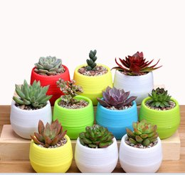 Fiber Pots Australia - Korean succulents small flower mini stone pill pots Rainbow pots pp resin plastic lazy pots