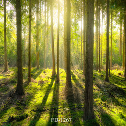 $enCountryForm.capitalKeyWord Australia - sunlight forest Vinyl photography background for children kids baby shower backdrop photocall